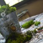 lichene stabilizzato