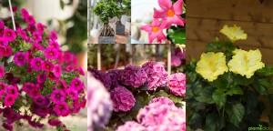 Pianteclick immagini fioriture